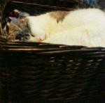 12-14-15-LouLoo-Sleeping